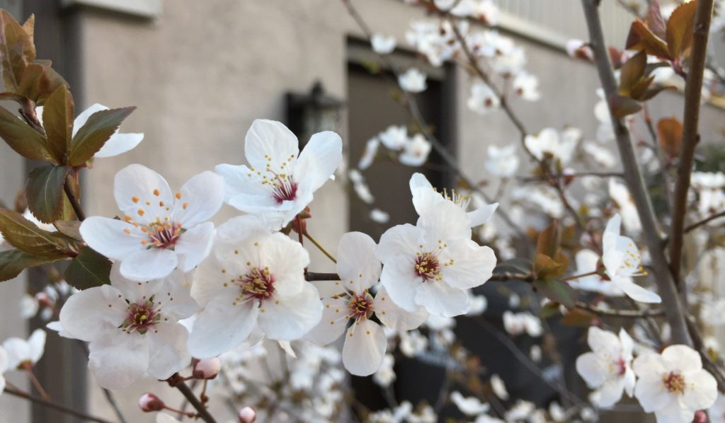 6 tips on how to use your iPhone for spring time photos