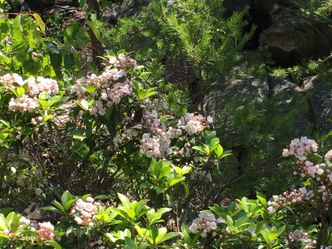 Hanging Rock State Park North Carolina Amazing Flowers