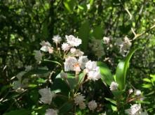 Hanging Rock State Park North Carolina close up of Flowers