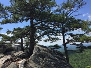 Hanging Rock State Park North Carolina Evergreen in stone