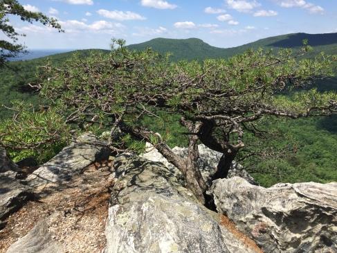 Hanging Rock State Park North Carolina Evergreen