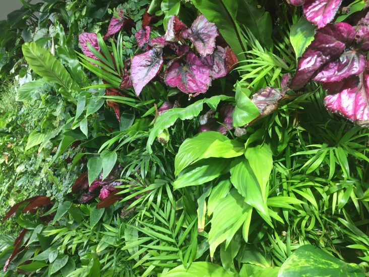 Plants at the Heathrow Garden Gate