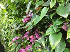 Close up of Plants at the Heathrow Garden Gate - using your iPhone Camera