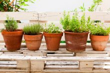 00-8-plants-that-repel-mosquitoes-that-you-need-in-your-backyard-1024x683